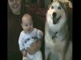 камеди клаб приколы с животными и детьми. комедия 2014 2013 приколы юмор студенты